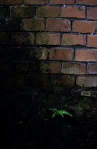 Outdoor Black Mold